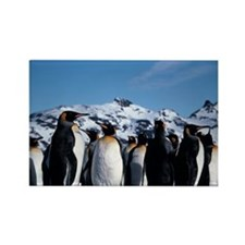 King penguins Rectangle Magnet