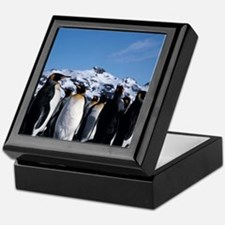 King penguins Keepsake Box