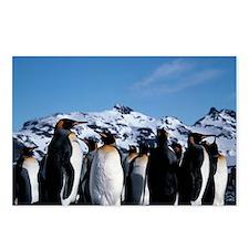 King penguins Postcards (Package of 8)
