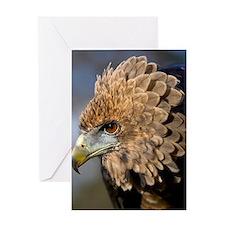 Juvenile bateleur eagle Greeting Card