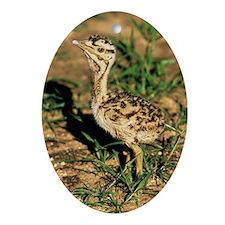 Kori bustard chick Oval Ornament