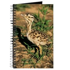 Kori bustard chick Journal