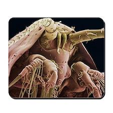 Krill head, SEM Mousepad