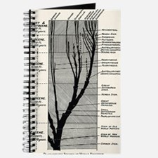 Human evolution Journal