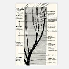Human evolution Postcards (Package of 8)