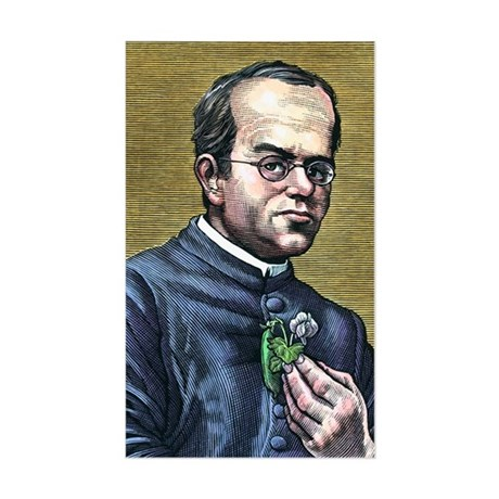 Gregor Mendel, Austrian botani Sticker (Rectangle)
