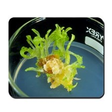 Biotechnology: tissue culture of tobacco Mousepad