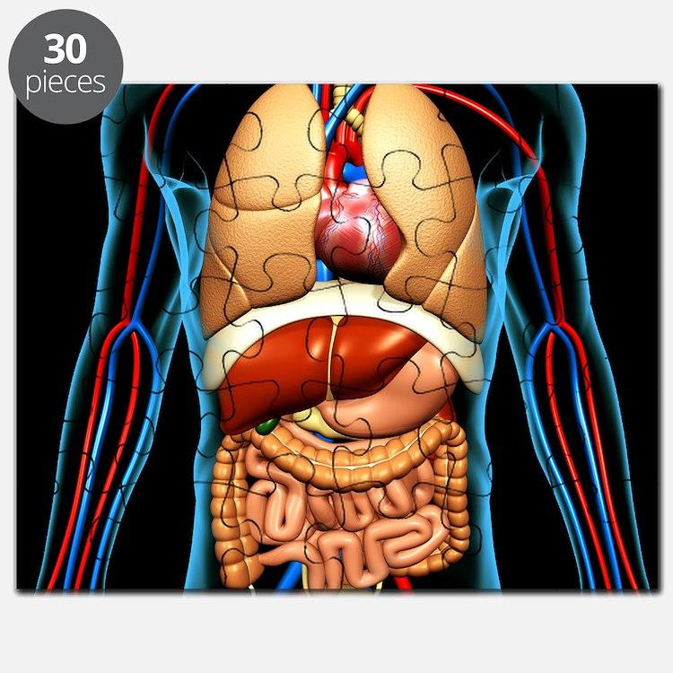 Anatomy jigsaw puzzles 1344157 - follow4more.info