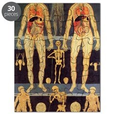 Male and female anatomy Puzzle
