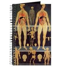 Male and female anatomy Journal