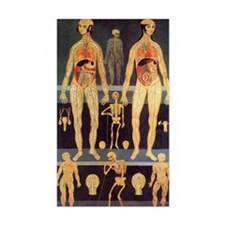 Male and female anatomy Decal
