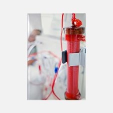 Kidney dialysis Rectangle Magnet