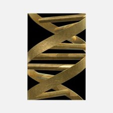 DNA helix Rectangle Magnet