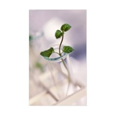 Plant biotechnology Decal