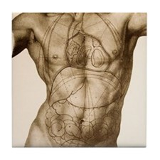 Positions of the internal organs Tile Coaster