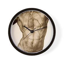 Positions of the internal organs Wall Clock