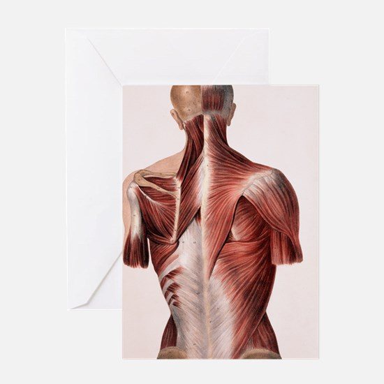 Muscles of the back Greeting Card