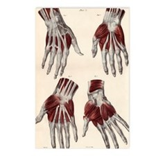Muscles of the hand Postcards (Package of 8)