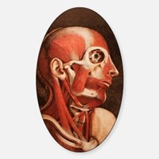 Muscles of the head and neck Decal