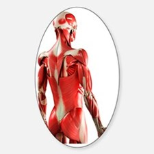 Male muscles, artwork Decal