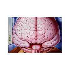Artwork of human brain enclosed i Rectangle Magnet