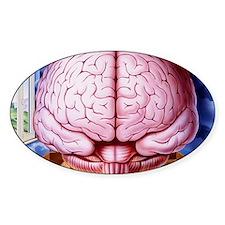 Artwork of human brain enclosed in  Decal