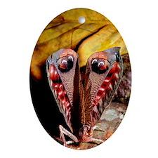 Leaf-mimic bush cricket Oval Ornament