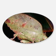 Leaf-mimic bush cricket Sticker (Oval)
