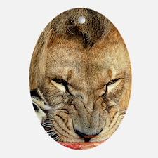 Lion feeding Oval Ornament