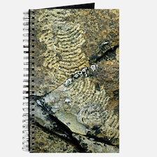 Limpet trails Journal