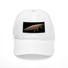 Lacewing larva, SEM Baseball Cap