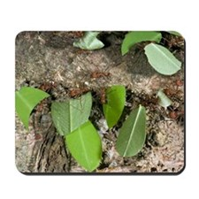 Leafcutter ants carrying leaves Mousepad