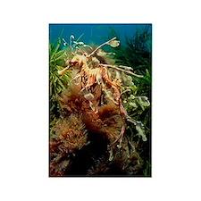 Leafy sea dragon Rectangle Magnet