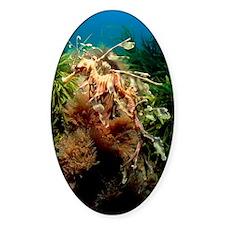 Leafy sea dragon Decal