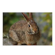 Wild Bunny Rabbit Postcards (Package of 8)