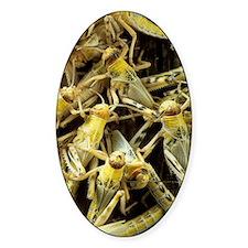 Locusts Decal