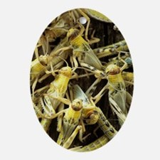 Locusts Oval Ornament