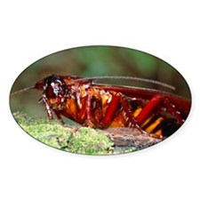 Long-winged cockroach Decal