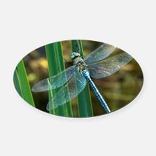 Male emperor dragonfly Oval Car Magnet