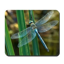 Male emperor dragonfly Mousepad