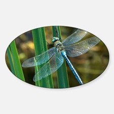 Male emperor dragonfly Decal