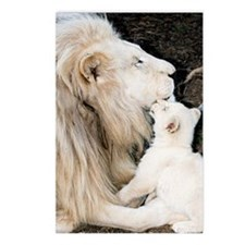Male white lion and cub Postcards (Package of 8)