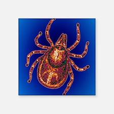 "Lyme disease tick Square Sticker 3"" x 3"""