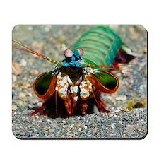 Mantis shrimp Mousepad