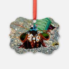 Mantis shrimp Ornament