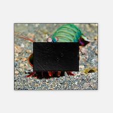 Mantis shrimp Picture Frame