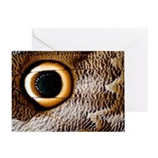 Macrophotograph of owl butterfly win Greeting Card