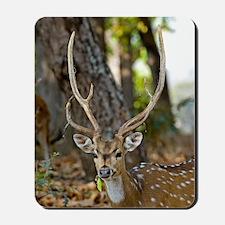 Male chital deer Mousepad