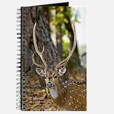 Male chital deer Journal