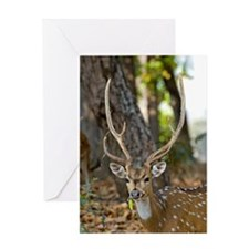 Male chital deer Greeting Card